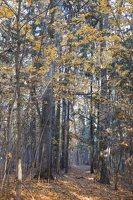 Verkiai · ruduo miške 6741