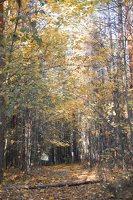 Verkiai · ruduo miške 6742