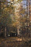 Verkiai · ruduo miške 6743