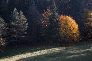 Verkiai · ruduo miške 6744
