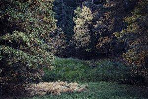 Verkiai · ruduo miške 6745