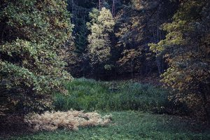 Verkiai · ruduo miške 6746