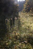 Verkiai · ruduo miške 6748