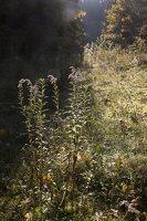 Verkiai · ruduo miške 6749