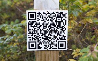 Verkiai · ruduo miške QRCode 6754