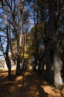Trakų Vokė · Andrė parkas, ruduo 6762