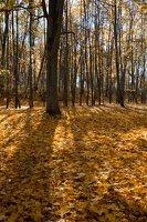 Trakų Vokė · Andrė parkas, ruduo 6763