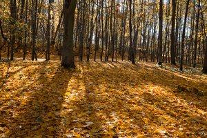 Trakų Vokė · Andrė parkas, ruduo 6764