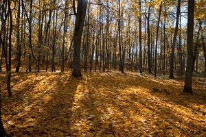 Trakų Vokė · Andrė parkas, ruduo 6765