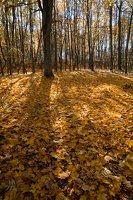 Trakų Vokė · Andrė parkas, ruduo 6766