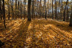 Trakų Vokė · Andrė parkas, ruduo 6767