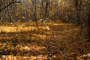 Trakų Vokė · parkas, ruduo 6775