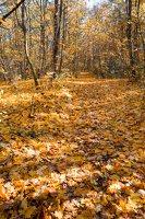 Trakų Vokė · parkas, ruduo 6779