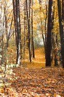 Trakų Vokė · parkas, ruduo 6787