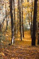 Trakų Vokė · parkas, ruduo 6789