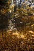 Trakų Vokė · parkas, ruduo 6794