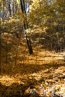 Trakų Vokė · parkas, ruduo 6795