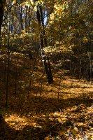 Trakų Vokė · parkas, ruduo 6796