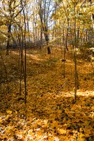 Trakų Vokė · parkas, ruduo 6797