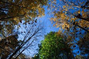 Trakų Vokė · parkas, ruduo 6800