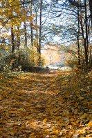 Trakų Vokė · parkas, ruduo 6805