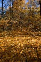 Trakų Vokė · parkas, ruduo 6808