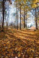 Trakų Vokė · parkas, ruduo 6809