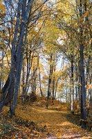 Trakų Vokė · Andrė parkas, ruduo 6818