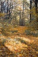 Trakų Vokė · Andrė parkas, ruduo 6819