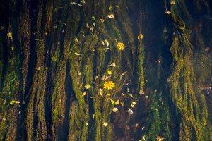 Trakų Vokė · Vokės upė, ruduo 6834