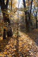 Trakų Vokės dvaro sodyba · Andrė parkas, ruduo 6845
