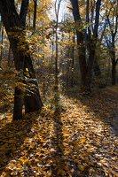 Trakų Vokės dvaro sodyba · Andrė parkas, ruduo 6846