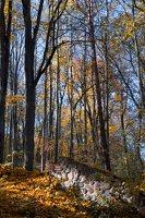 Trakų Vokės dvaro sodyba · Andrė parkas, ruduo 6847