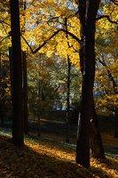 Trakų Vokės dvaro sodyba · Andrė parkas, ruduo 6851