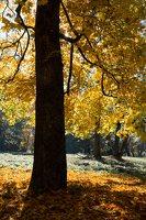 Trakų Vokės dvaro sodyba · Andrė parkas, ruduo 6855