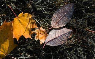 Trakų Vokės dvaro sodyba · Andrė parkas, ruduo 6857