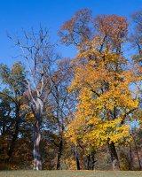Trakų Vokės dvaro sodyba · Andrė parkas, ruduo 6859