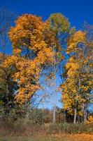 Trakų Vokės dvaro sodyba · Andrė parkas, ruduo 6860