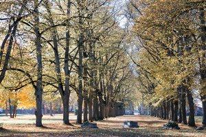 Trakų Vokės dvaro parkas · liepų alėja 6872