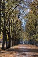 Trakų Vokės dvaro parkas · liepų alėja 6876