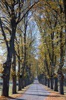 Trakų Vokės dvaro parkas · liepų alėja 6882
