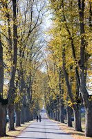 Trakų Vokės dvaro parkas · liepų alėja 6888