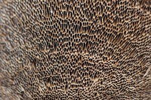 Fungi · grybai 1331