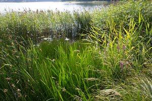 Veisiejų dvaro parkas · ežeras Ančia 4384