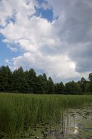 Veisiejų dvaro parkas · ežeras Ančia 4423