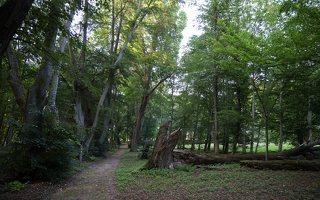 Vainežerio dvaro parkas · senoji dvarvietė 4462