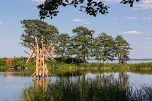 Povilas Šorys · pasaulio medžio šlamėjimas 1950