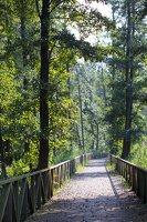 medinis takas link kormoranų kolonijos 5034