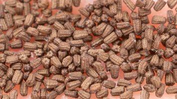 Scrophularia nodosa seeds · nariuotasis bervidis, sėklos 4899