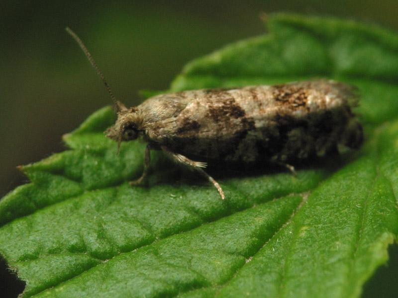 Lepidoptera-7611.jpg